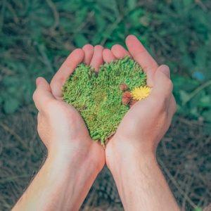 Direito e Meio Ambiente: O Papel da Sociedade